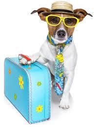 Dog with sunglasses